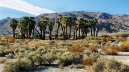 Hotels in Twentynine Palms